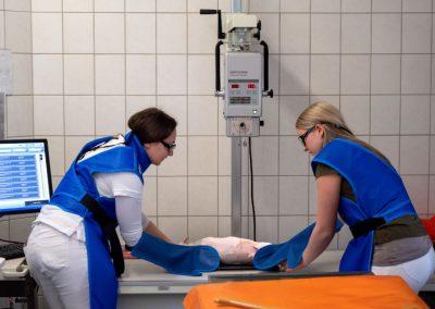Röntgen in der Tierarztpraxis Dres. Mäusl in Hengersberg