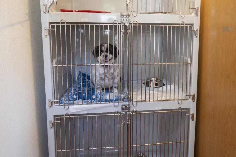 Käfig für kranke Tieren in der Tierarztpraxis Dres. Mäusl in Hengersberg