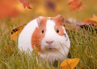 Gesunde Tiere durch Ihre Tierarztpraxis Dres. Mäusl in Hengersberg